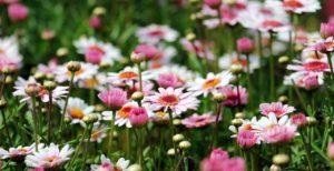 Tajomná reč kvetov